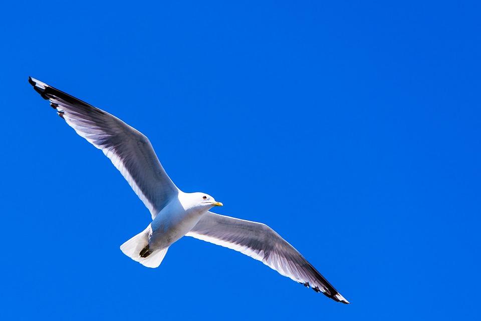 「第二の人生」では「心」は自由に羽ばたける