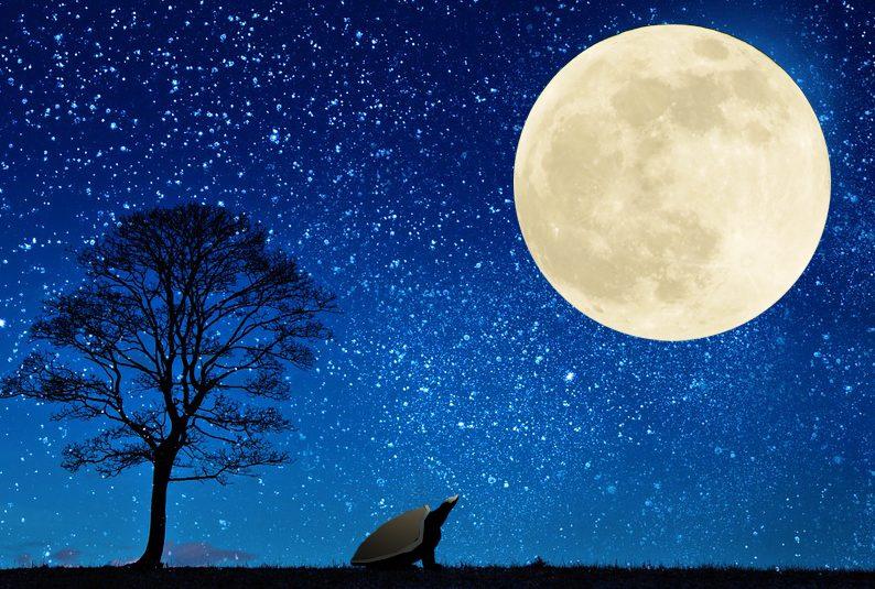 【第二の人生】人生の意義「死のとらえ方で人生幸福度が月とスッポン」